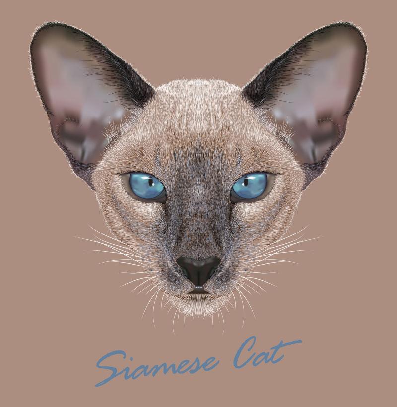 暹罗猫矢量图