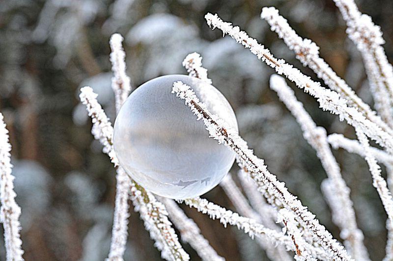 冬天树枝上的泡泡