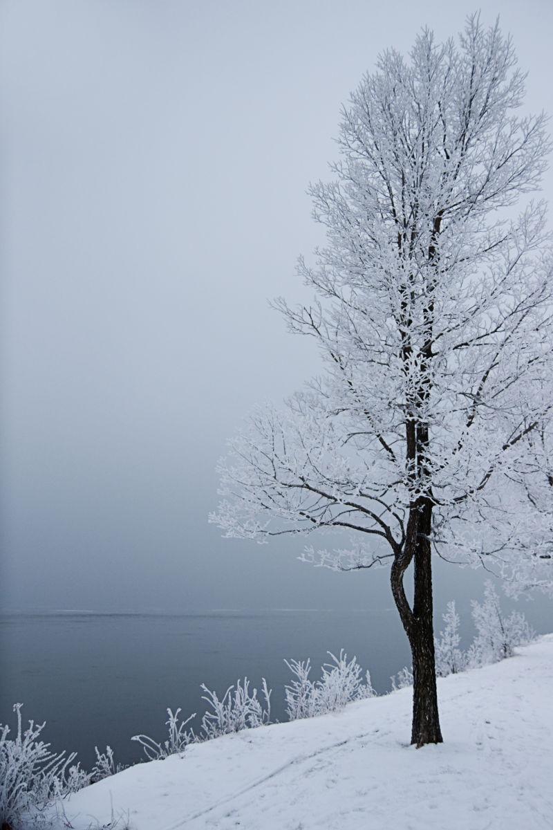 雪白的树枝