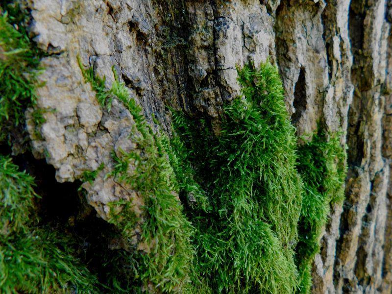 岩石上的苔藓