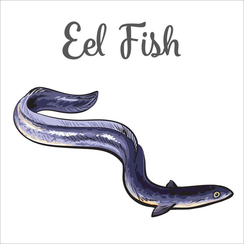 矢量的鳗鱼插图