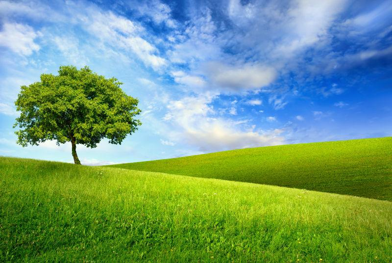 蓝天白云下的绿草地和树