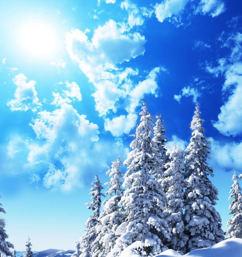 冬日白雪覆盖下的松树