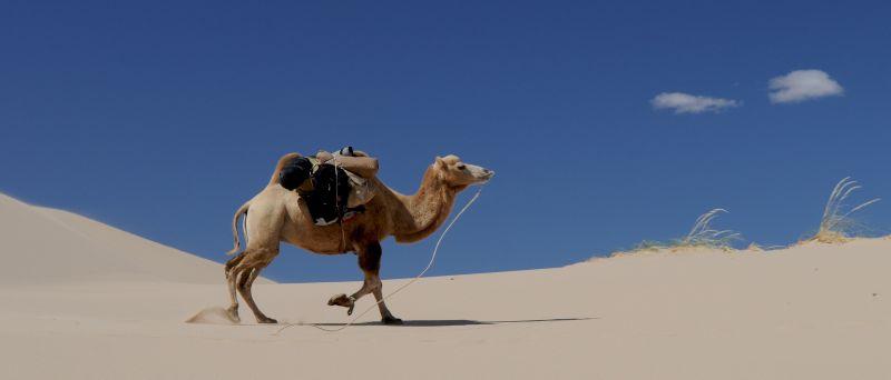 沙漠上行走的骆驼