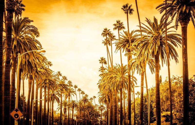 洛杉矶的棕榈树