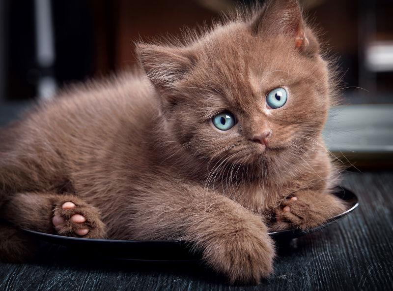 黑色地毯上的布朗小猫