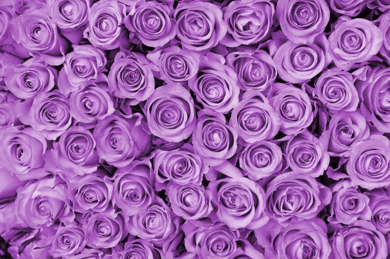 紫玫瑰花瓣