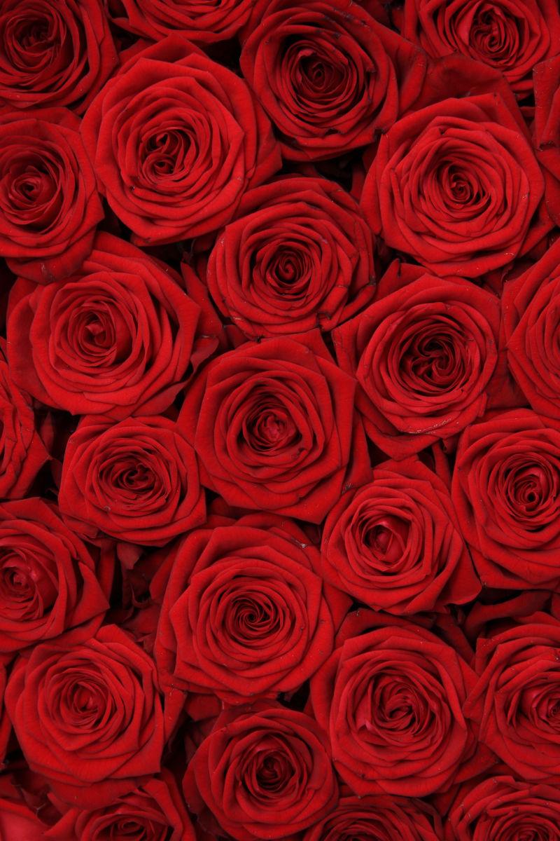美丽的一束红玫瑰