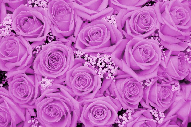 好看的粉红玫瑰