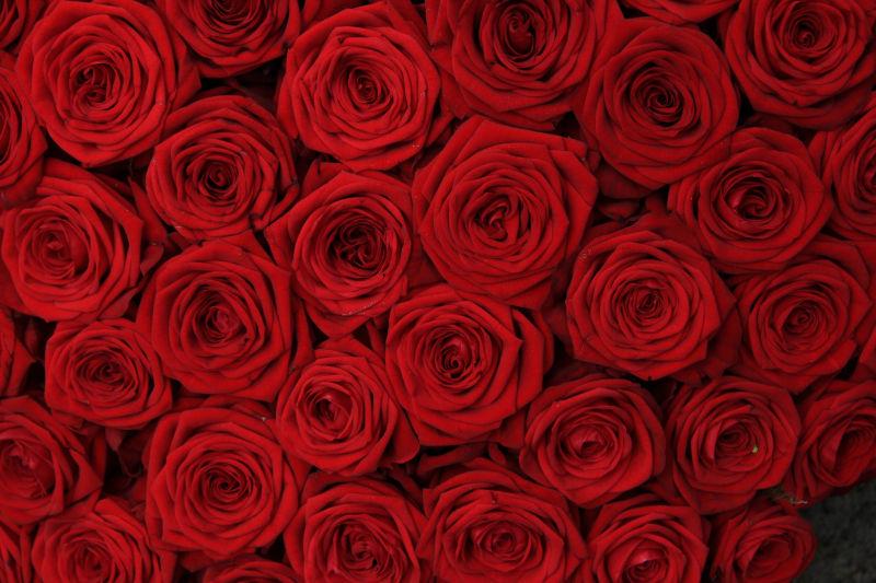 许多红色玫瑰