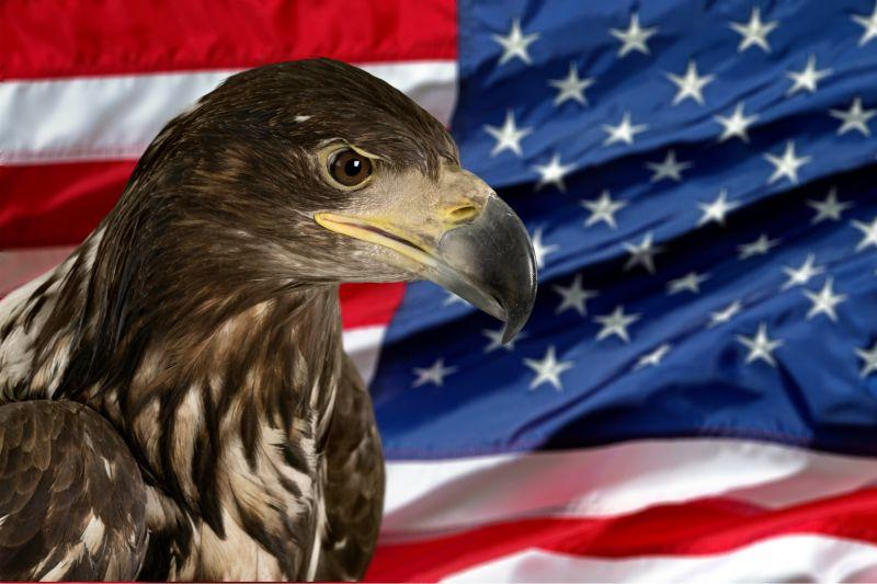 美国国旗背景下的老鹰