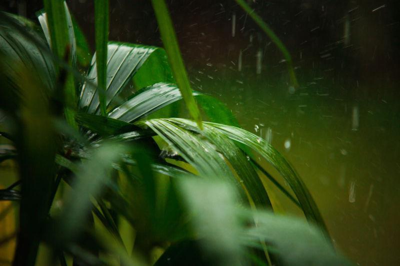 在雨天的绿色棕榈叶