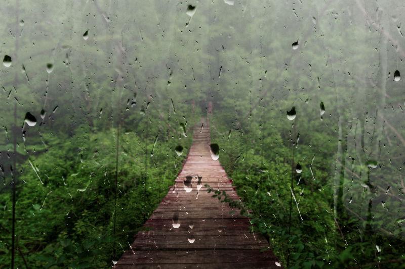 热带雨林中的桥