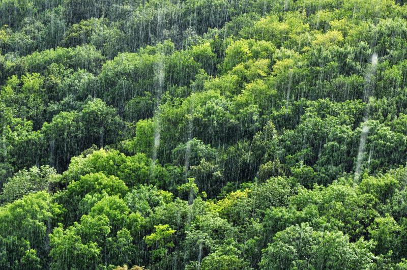 茂密的森林在下雨