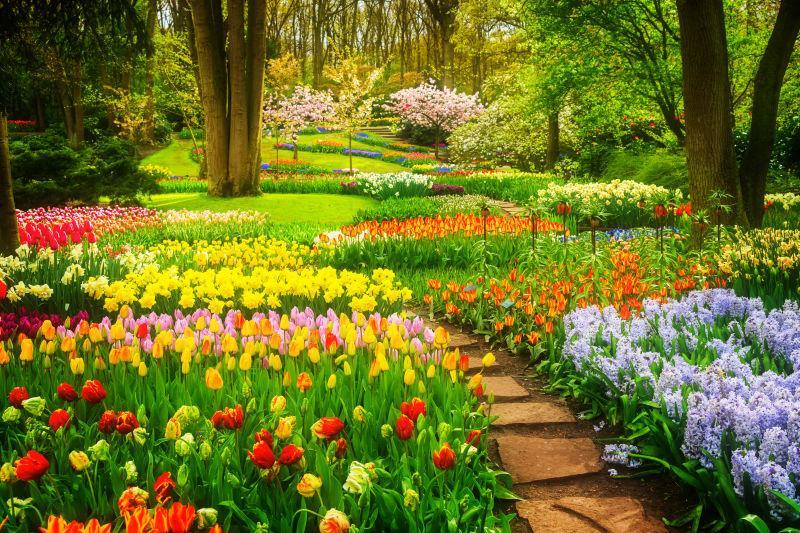 春天花园里的郁金香花坛