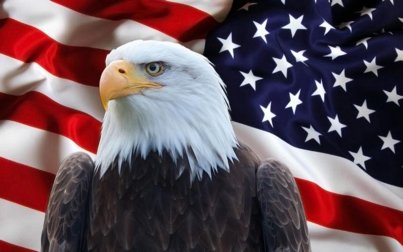 美国国旗与鹰