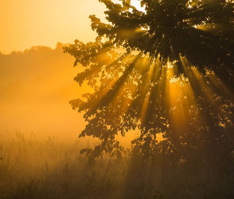清晨的大雾笼罩着森林