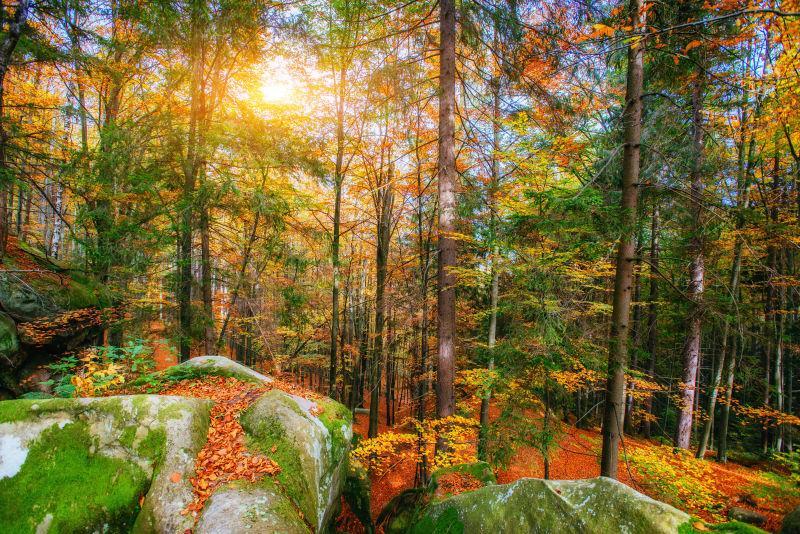 秋天阳光明媚下的森林