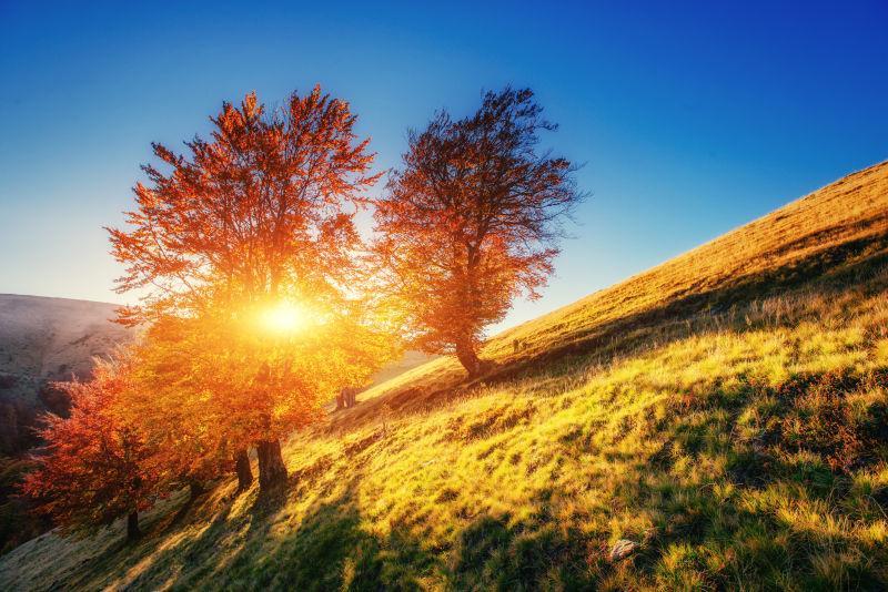 阳光照射下秋天的森林