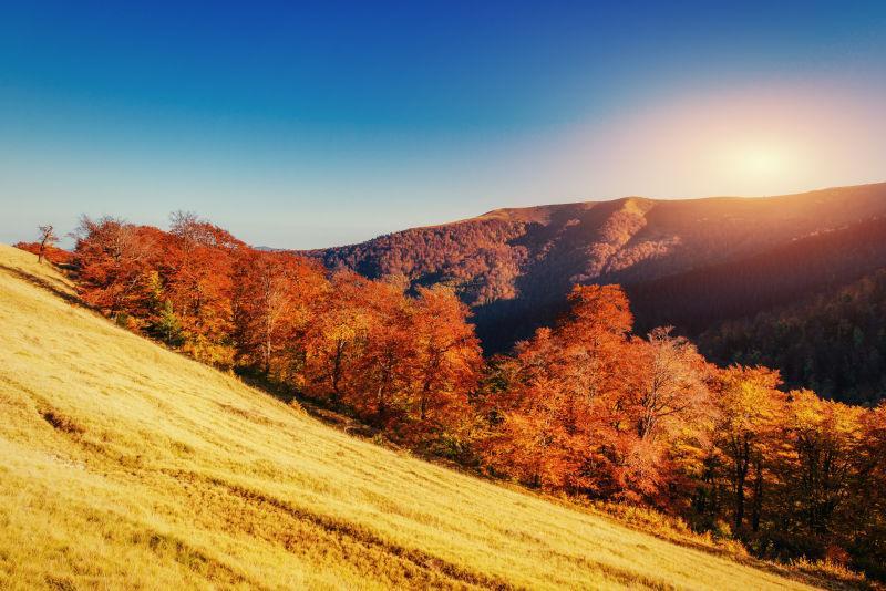 秋天金黄色的森林