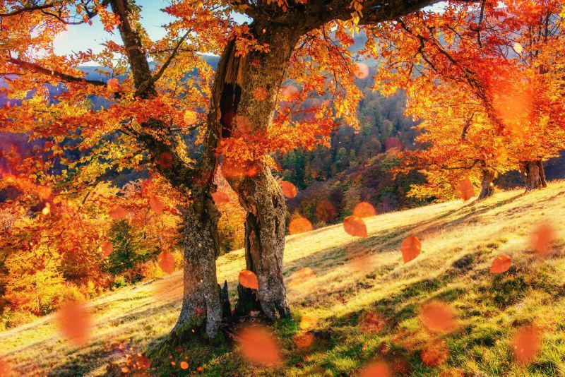 秋天森林里落叶飞舞的树