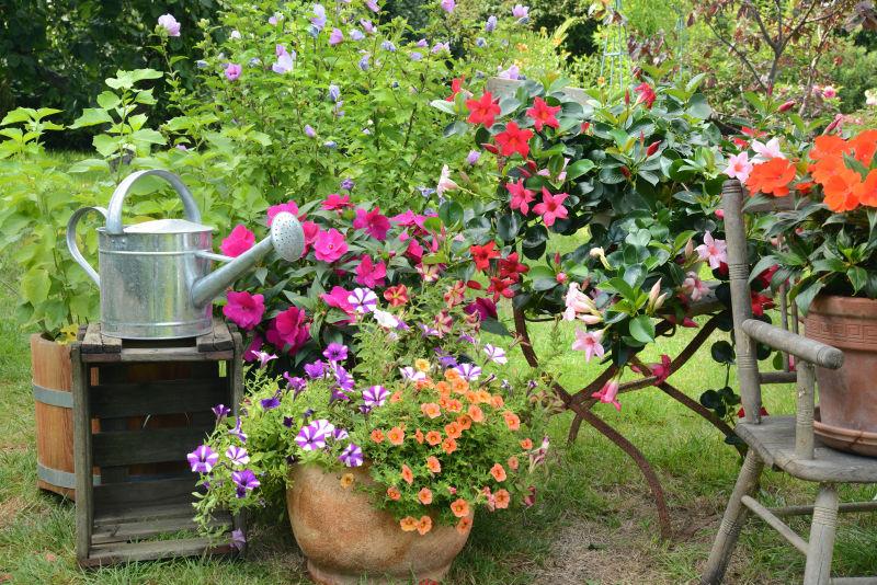花园里的园艺工具和鲜花