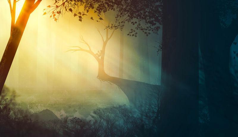 森林里美丽的光束
