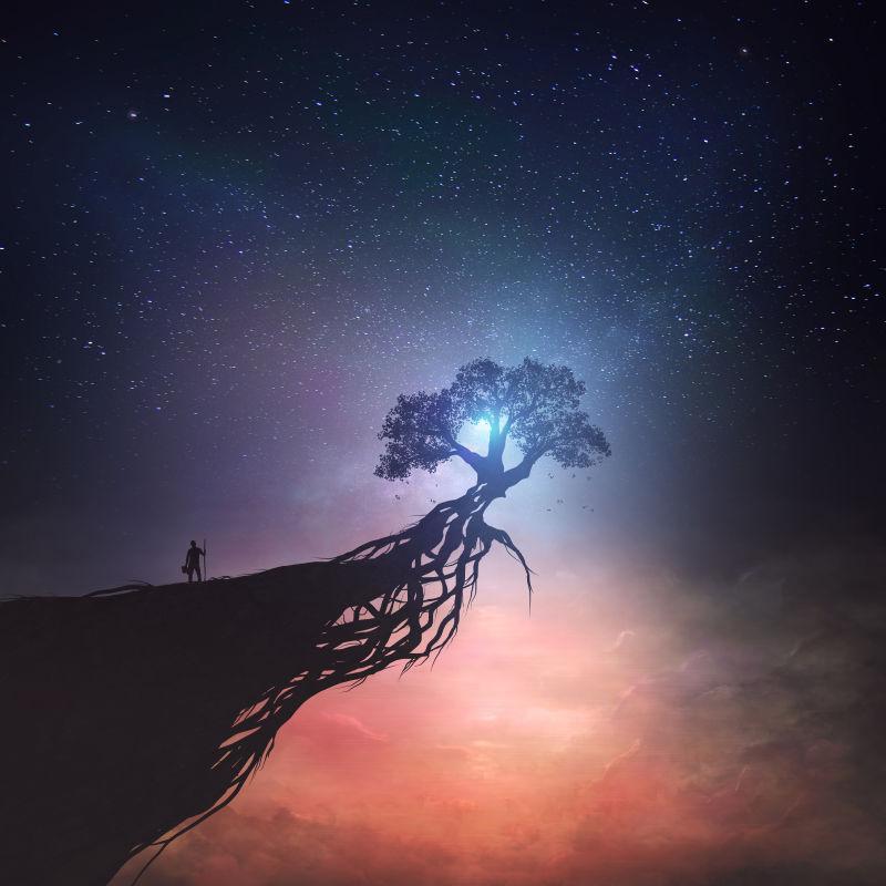 月色下的树木