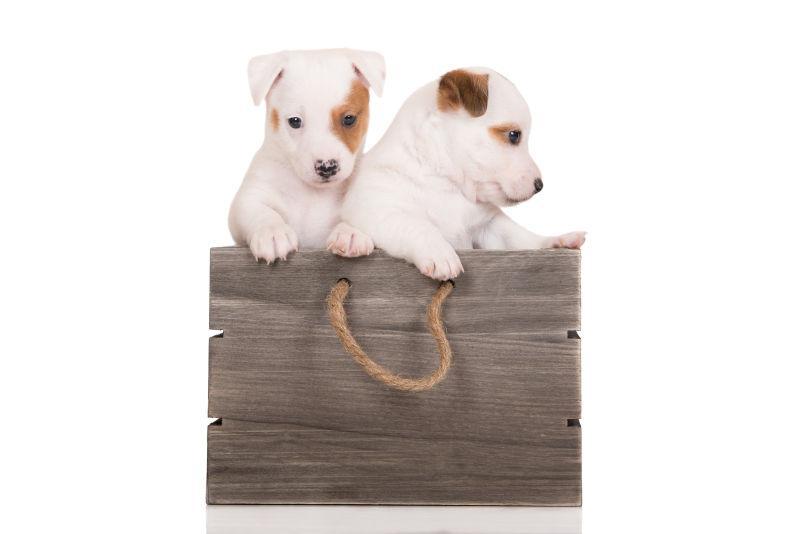 趴在木板上的两只小狗