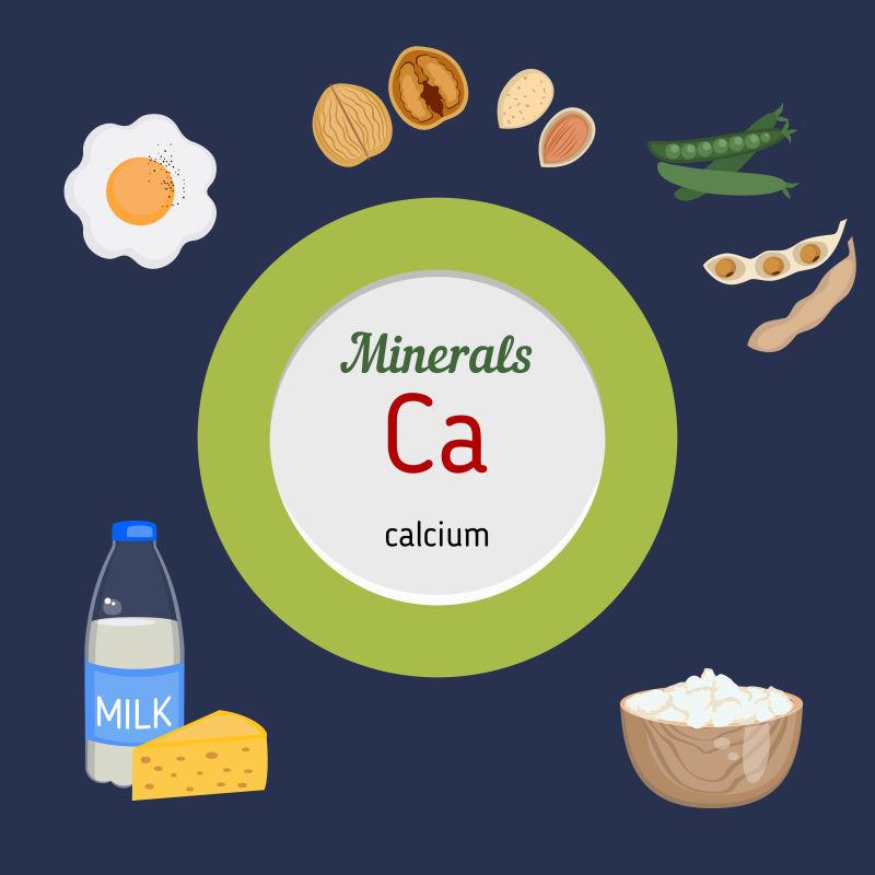 富含钙的食物矢量插图
