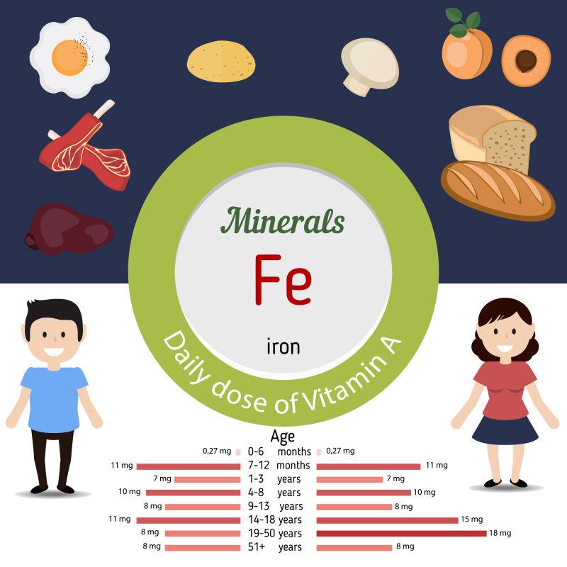 富含铁的食物矢量插图