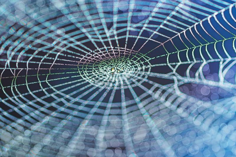 五颜六色的蜘蛛网