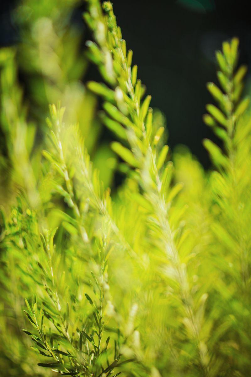 一束鸵鸟蕨类植物