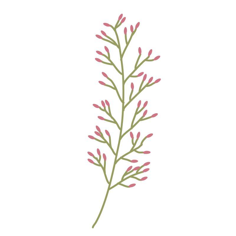 粉色的花蕾绿枝