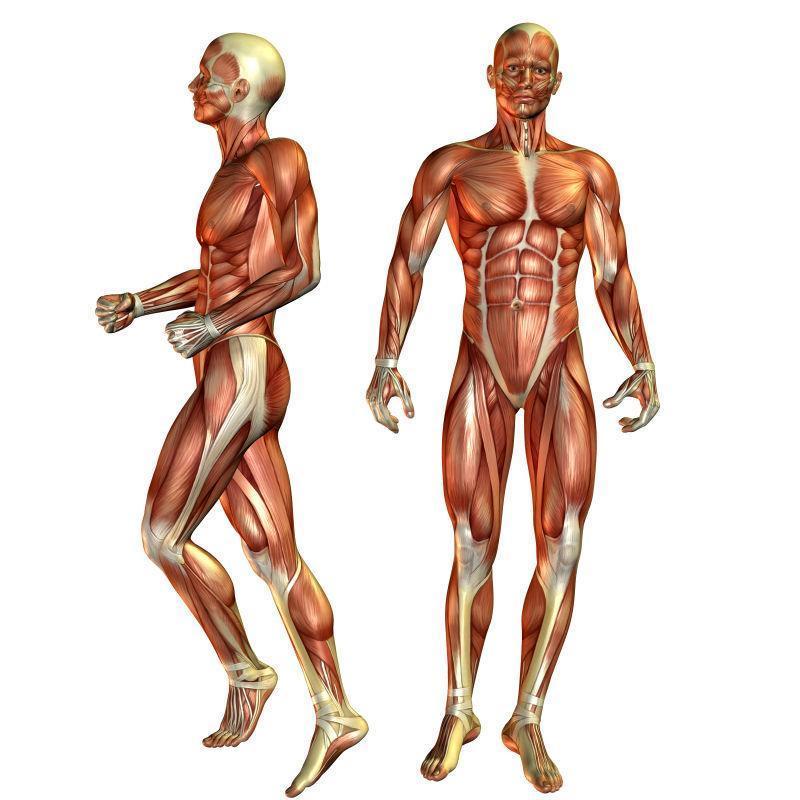 在站立姿势的肌肉男人