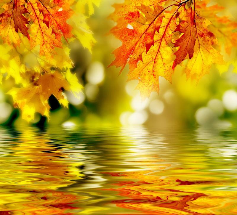河面上美丽的枫叶