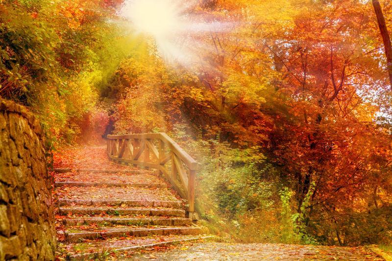 秋天公园里的石