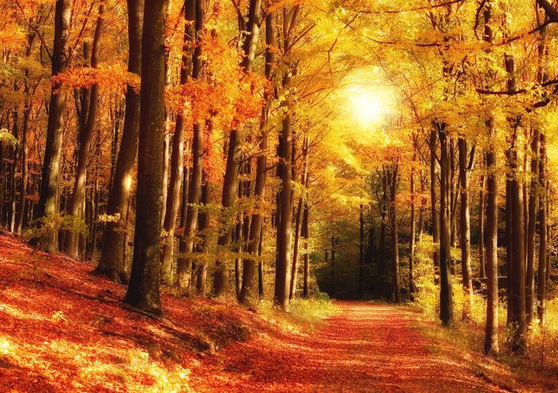 金色的秋季林间小路