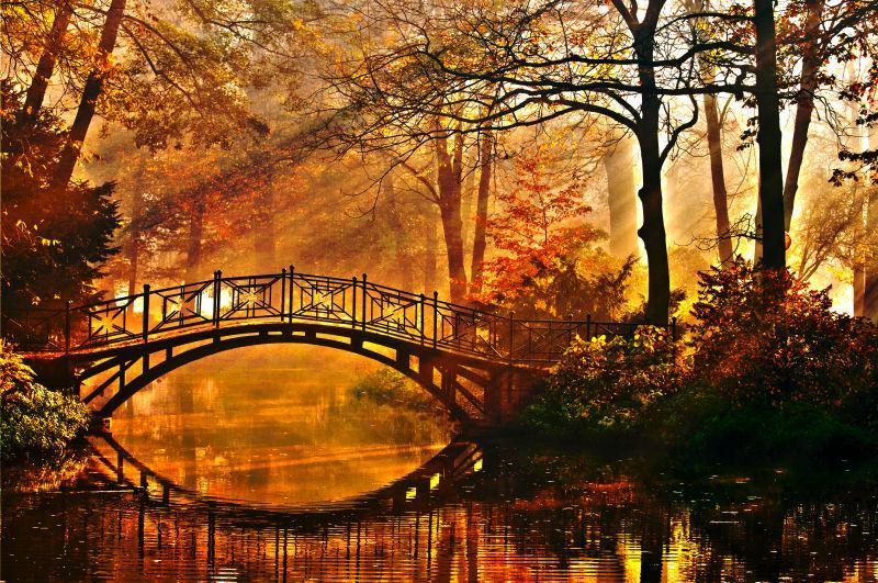 金色秋天林间的拱桥