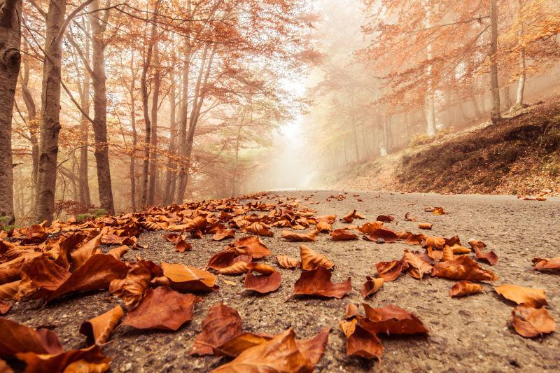 秋天道路上的落叶