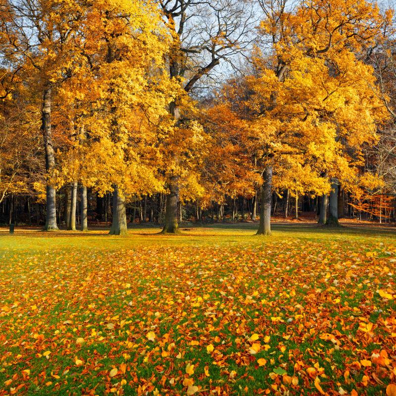 秋天公园的树