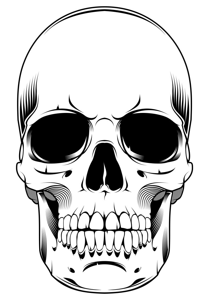 矢量的人体颅骨插图