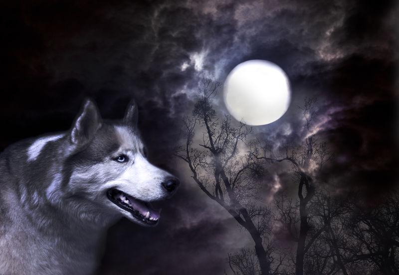 喜爱月亮的狼