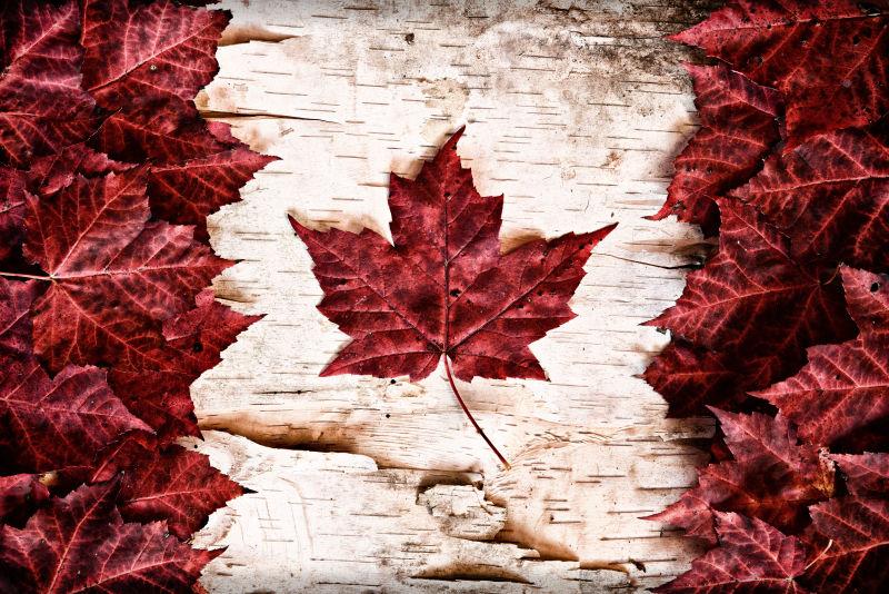 红叶组成的加拿大国旗
