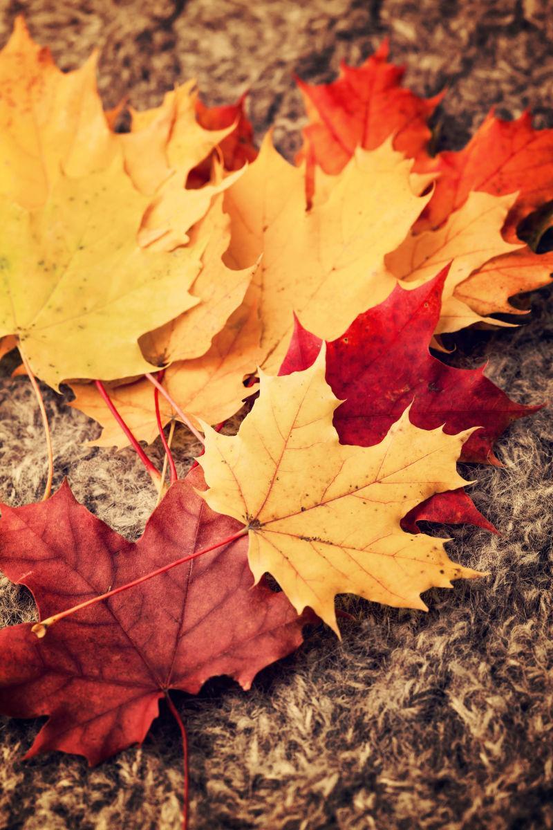 掉落在地面上的枫叶