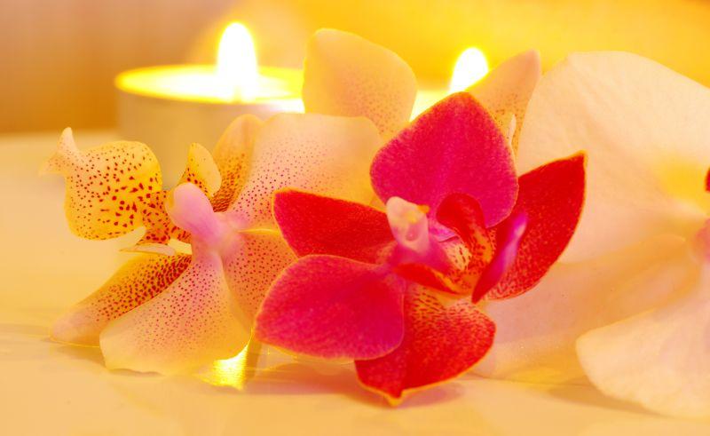 水疗生活馆中的花朵