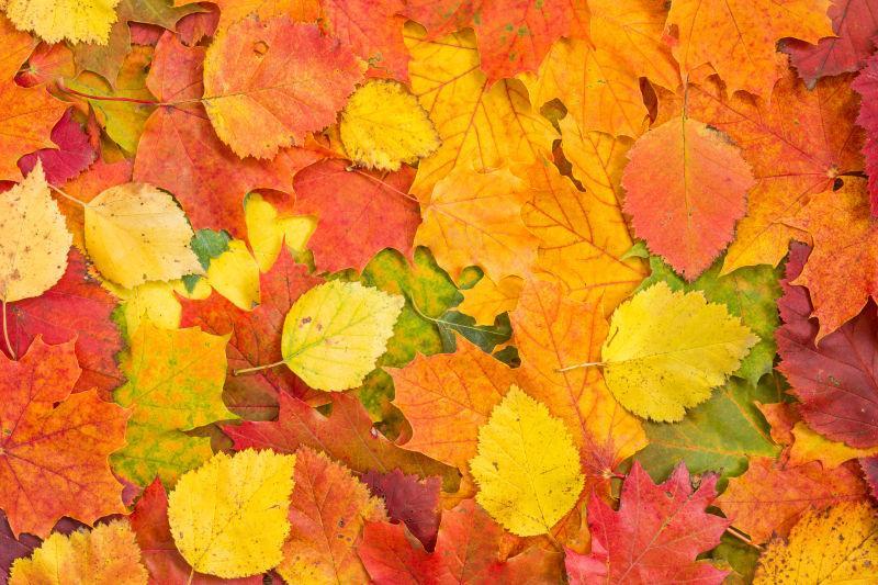 铺满了地面的落叶