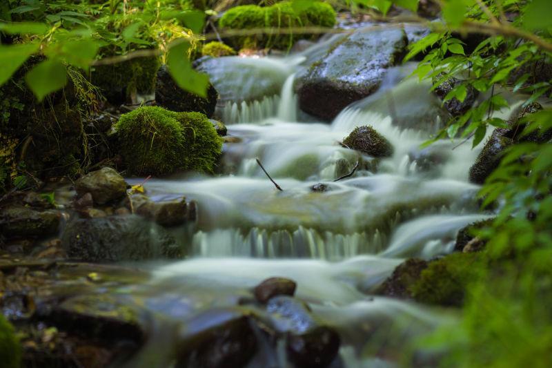 深林中的河