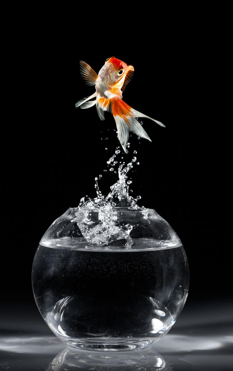 鱼缸背景矢量图_金鲤鱼素材-高清图片-摄影照片-寻图免费打包下载