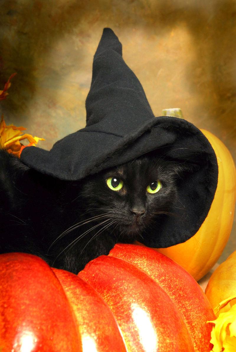 南瓜上的黑猫戴着帽子